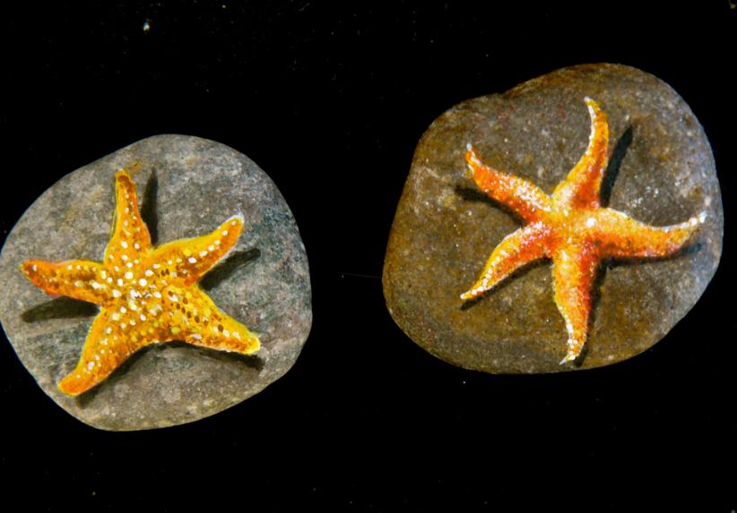 tengeri_csillagok
